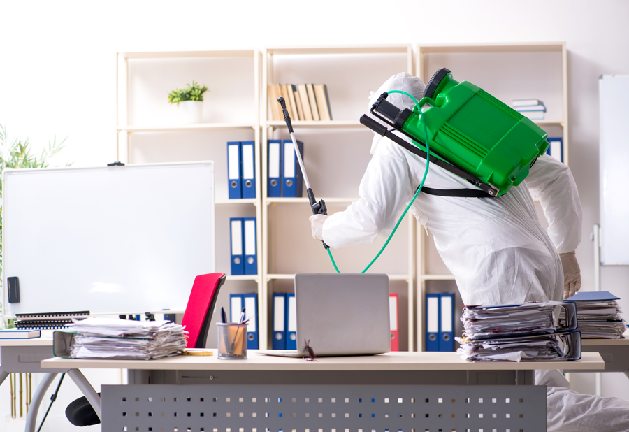 désinfection de maisons, appartements et bureaux